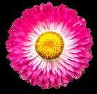 flower02-min.png