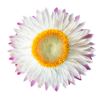 flower06-min2.png