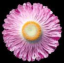 flower08-min2.png