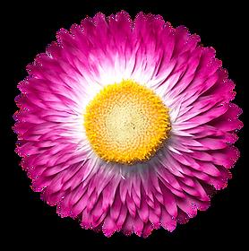 flower04-min.png
