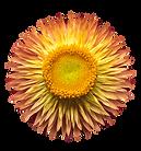 flower01-min.png