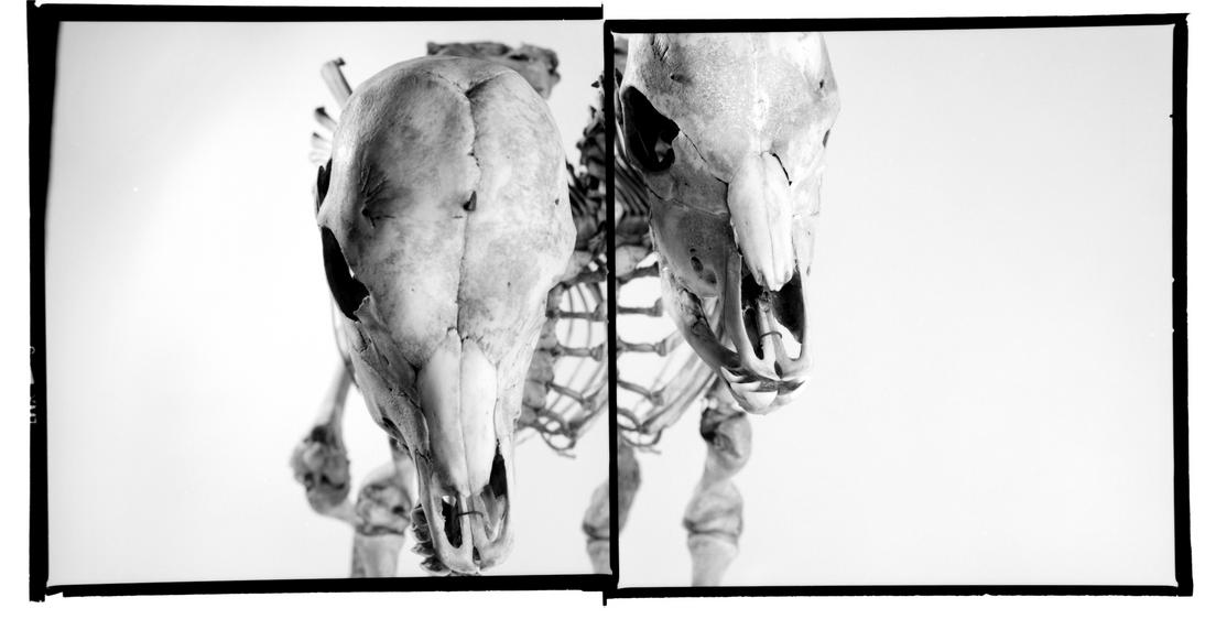 Animalité-02.png