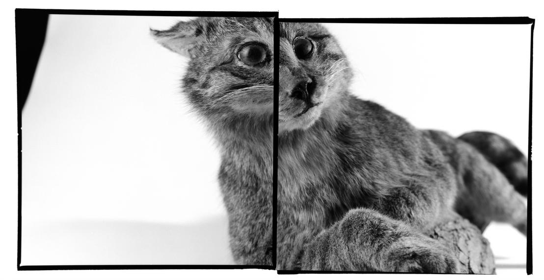 Animalité-07.png