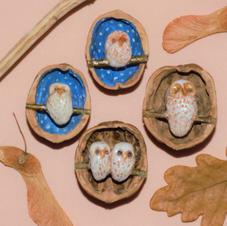Owls Snug in a Walnut Shell