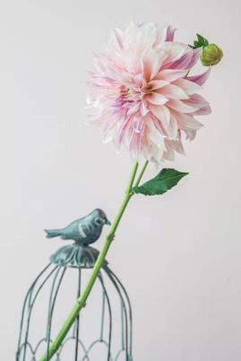 dahlia wedding flowers