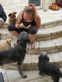 Dogs and Treats at Henry's