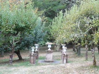 Orchard (3)