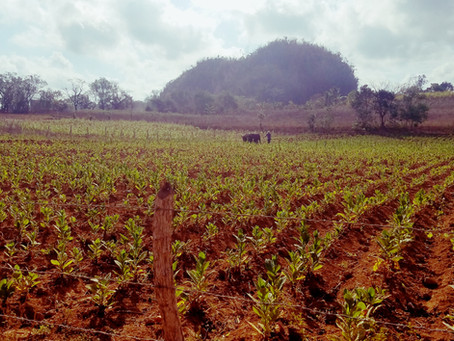 Aventuras en Cuba: Part 2