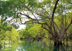 National Park Las Baulas Tamarindo
