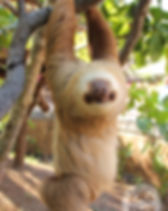 Diamante Animal Sanctuary7-boho-tamarind