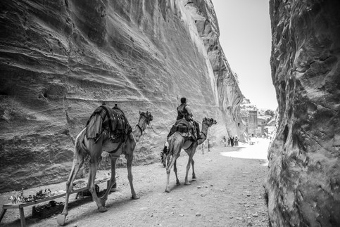 Camels in Petra - Sophia Bennett.jpg