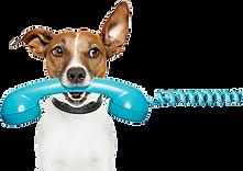 cachorro ao telefone