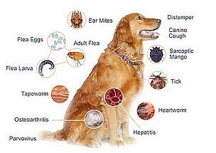 cachorro doenças
