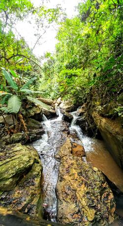Jungle Beauty