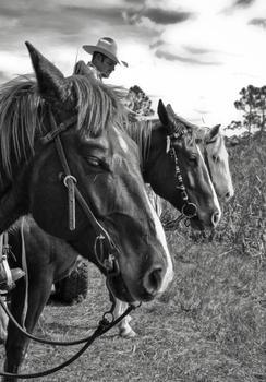 LAST COWBOYS // JUPITER FARMS