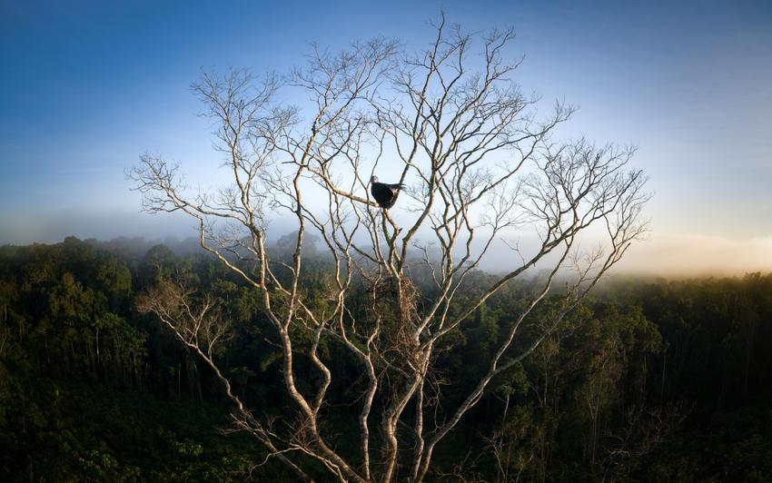 PORTRAIT OF A HARPY EAGLE // AMAZONIA