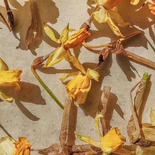 pantone131c_flower1.jpg
