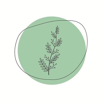 Plant Medicine Certification Course