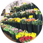 Schnittblumen von Blumenwiese Lage