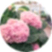 Blumenwiese-Lage liefert Ihre Bestellung bis 15km um Lage.