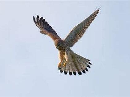 Bird of Prey Serial - first installment