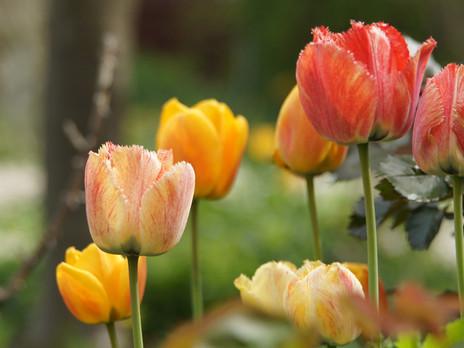 Fang den Frühling ein!