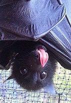 cute bat.jpg