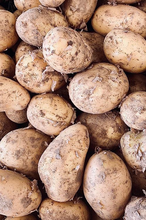 Pomme de terre de notre production