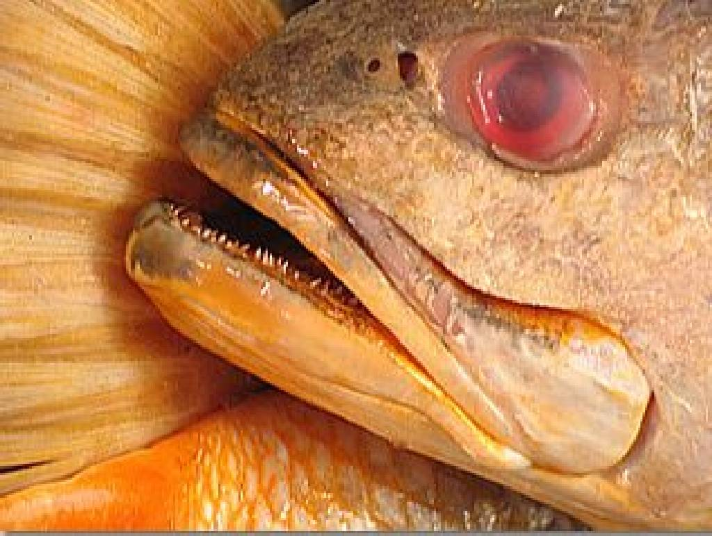 peixaria.JPG
