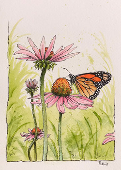 Echinacea & Monarch