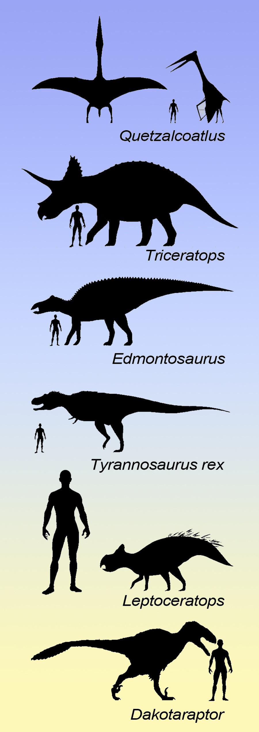 dinosaur size chart
