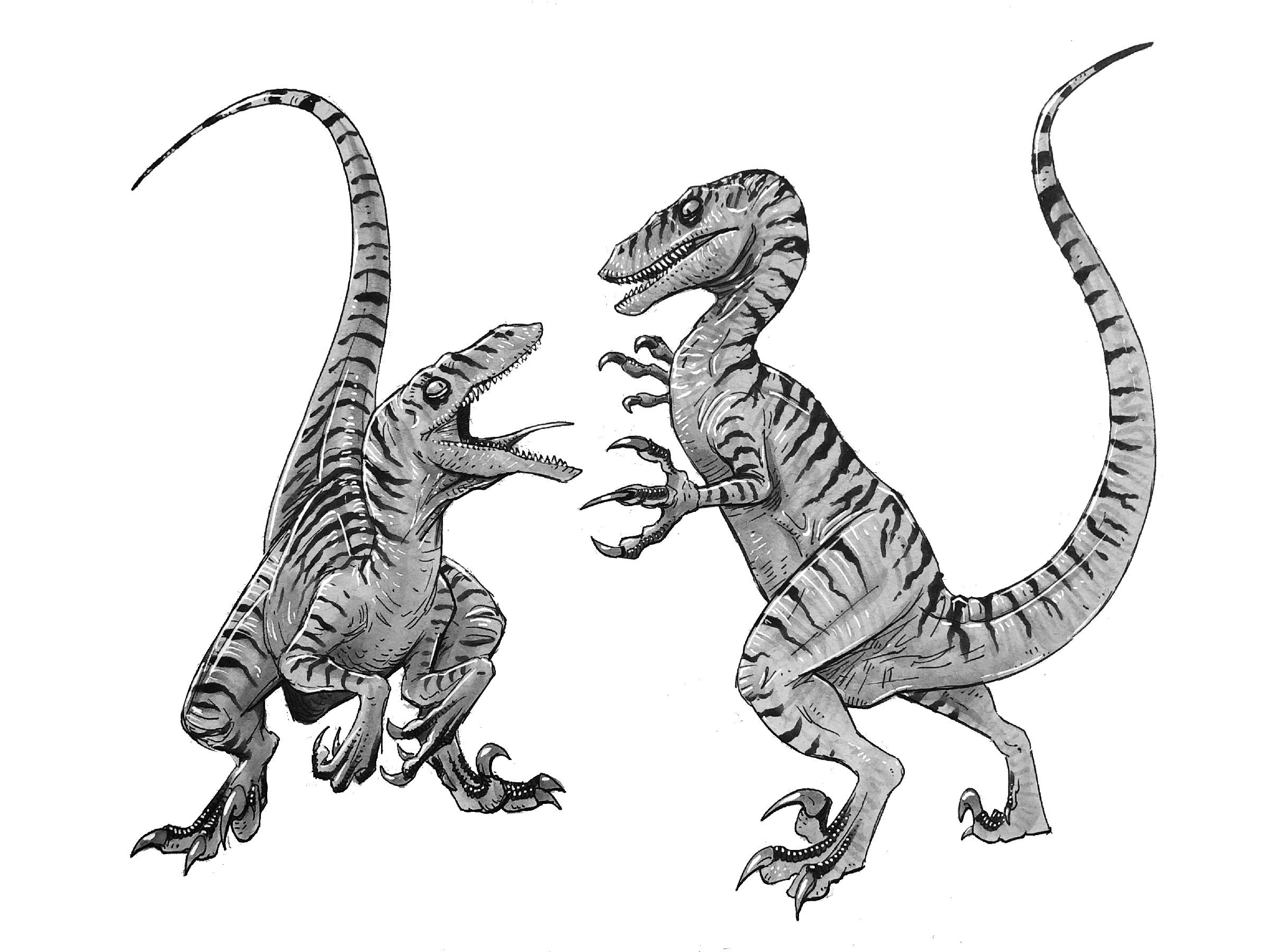 TLW Raptors