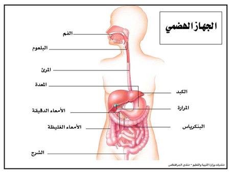 الجهاز الهظمي