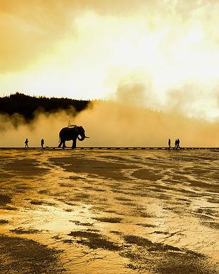 Éléphant+Yellowstone.jpg