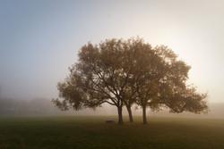 Fog+001