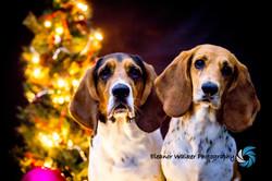 Eryn Wollbaum Group Christmas 2018-1