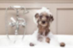 Hundefriseur und Hundesalon