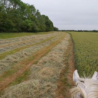 checking the hay.jpg