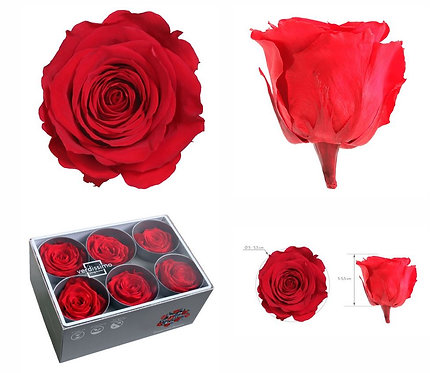 12 BOITES DE 6 Roses ROUGE Standard STABILISEES