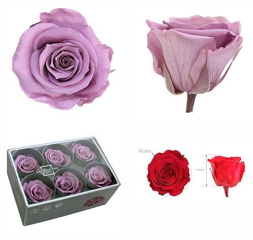 6 Roses standard LILAS