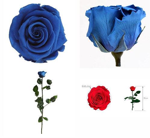1 Rose à tige BLEU 27.5cm