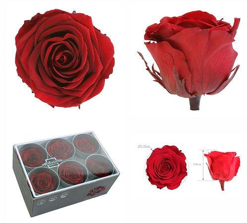 rose éternelle , fleur stabilisée toulouse