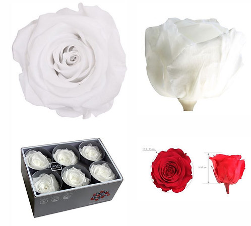 6 ROSES BLANCHE STANDARD STABILISEE