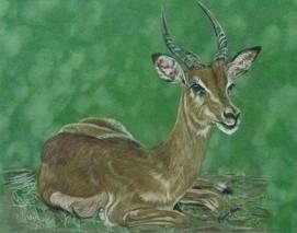 indigo antelope.jpg