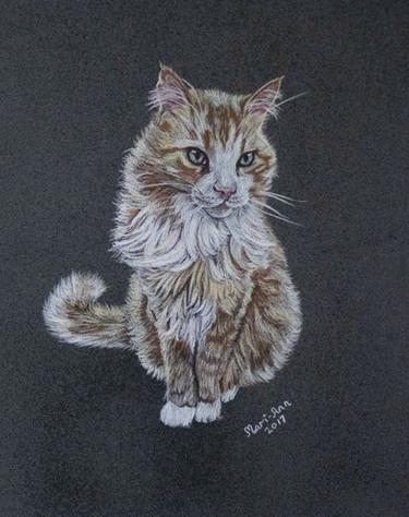 indigo mari ann brown cat.jpg