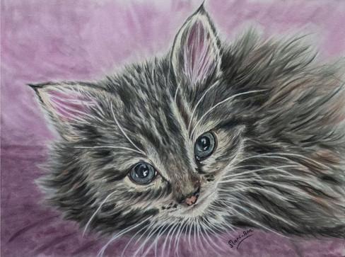 indigo mari ann kitten.jpg