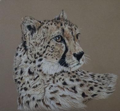indigo mari ann cheetah.jpg