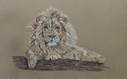 indigo mari ann lion.jpg