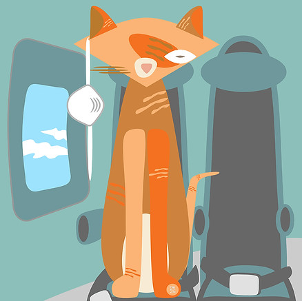 ORANGE CAT IN ECONOMY CLASS
