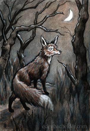 Fox and Moon